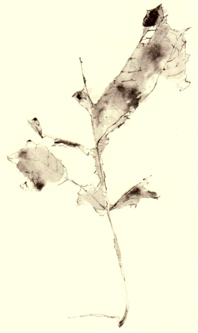 Franck-drawing-128